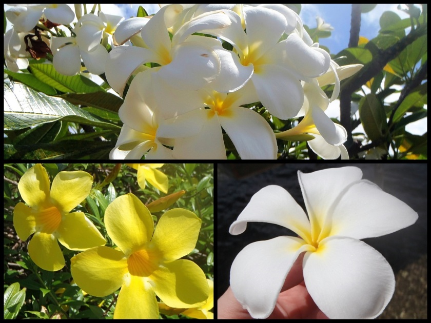 Fleurs de tahiti tiare - Cliquer pour agrandir
