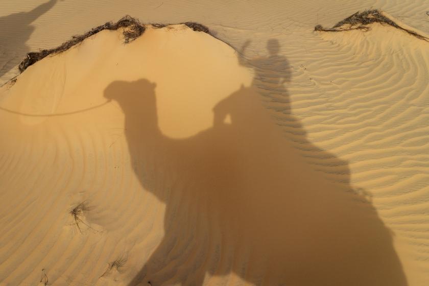 jour24-ombrage-chameau