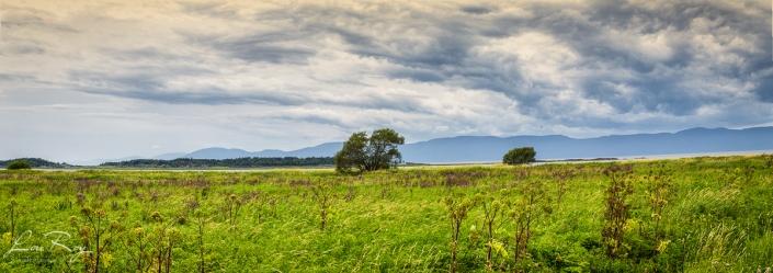 Photo panoramique du haut marais de l'Isle-aux-Grues (montage de cinq photos)